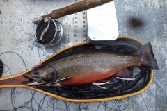 Brook Trout are beautiful